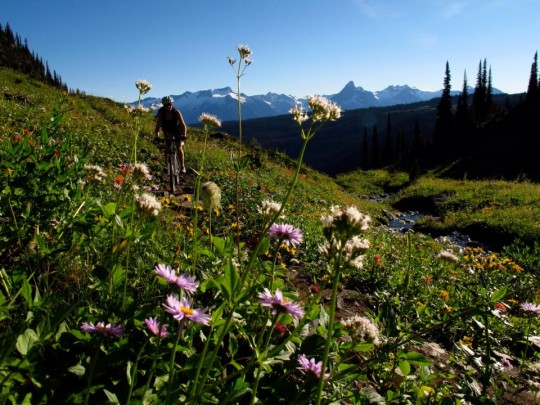 Biking Keystone Trail with lots of wildflowers