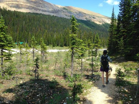 Hiking the Iceline Trail in Yoho National Park, Canada