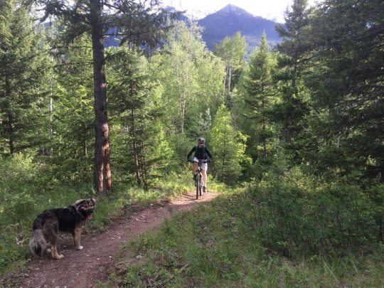 Biking in Golden, BC with dogs