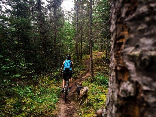 Dog friendly mountain biking in Golden, Kootenay Rockies