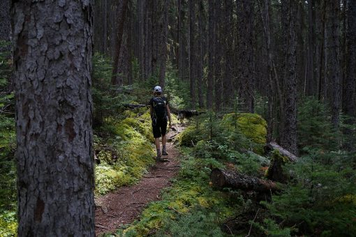 Dog friendly hike in Golden BC
