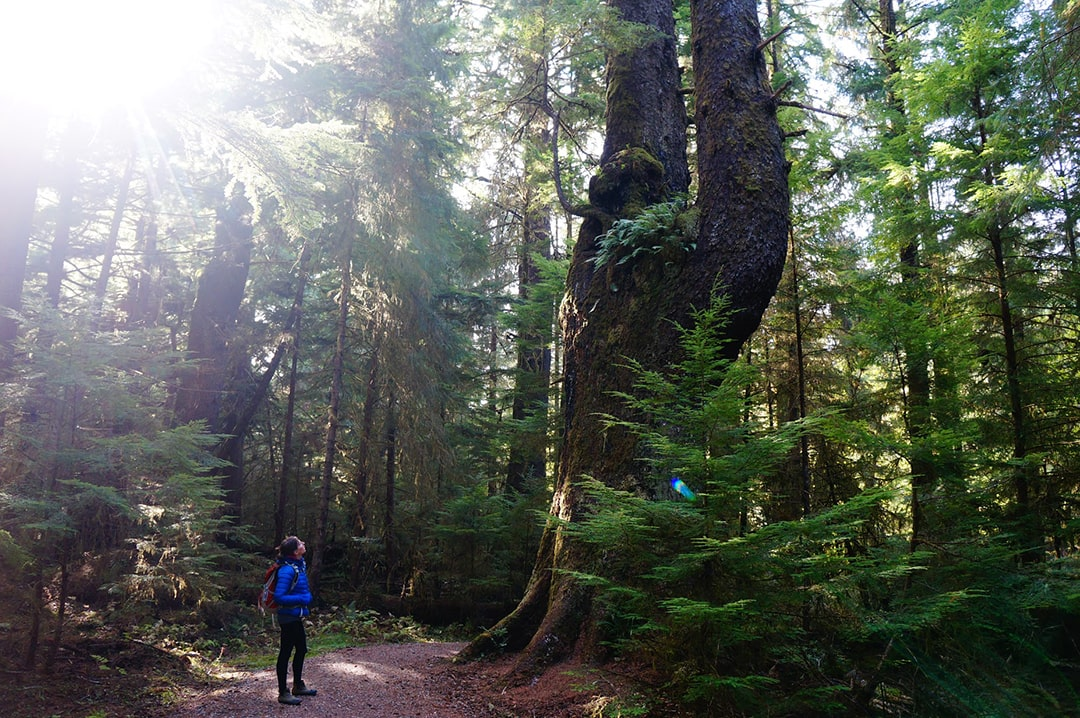 Hiking and connecting with nature, BC